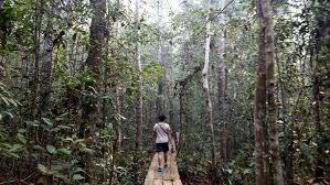 Keanekaragaman Hayati, Ketahanan Pangan, dan Deforestasi, Serta Pulau Solor